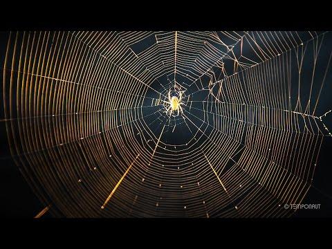 Spider Net Building Timelapse