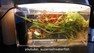 mini nano planted fish tank half gallon with carbon and free co2 amazing awesome