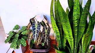 7 Plantas para Cultivar na Sombra ou Dentro de Casa