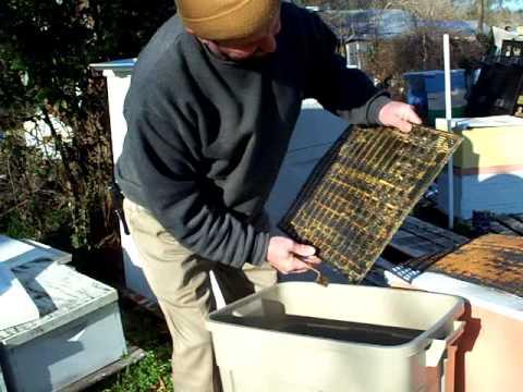 PROPOLIS,Propolis Traps Harvesting,Honey Bees Resin Beekeeper John Pluta Beehives Georgia Beekeeping