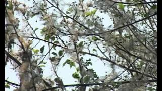 Нашествие насекомых 14-06-2012
