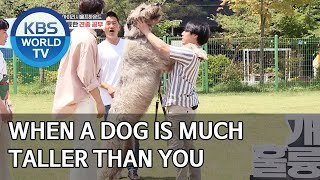 When a dog is much taller than you [Dogs are incredible/ENG/2020.07.15]