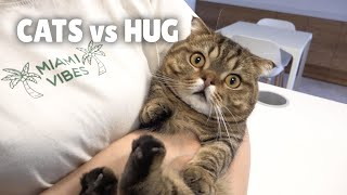 Cats vs Hug | Kittisaurus