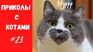 Смешные КОТЫ КОТИКИ КОТЯТА Приколы с животными 23