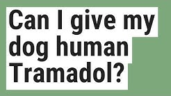 Can I give my dog human Tramadol?