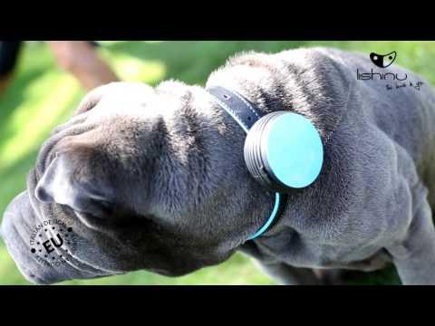 Lishinu einziehbare Hundeleine für Handgelenk