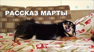 Рассказ собаки Марты