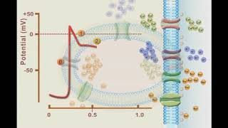 Action Potential (Award-Winning Work)