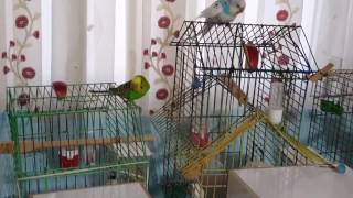 Muhabbet Kuşu - Kuşlarımı Saldım