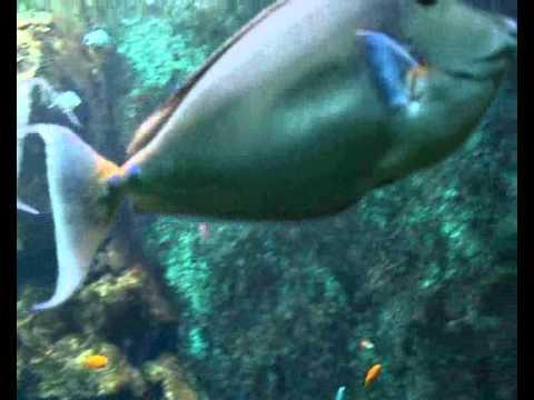 Vidéo eaux tropicales grand aquarium Saint Malo
