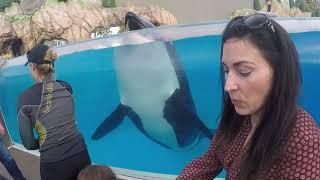 Sea World San Diego Orca Encounter 1/14/2018