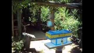 colhendo mel da abelha jatai na caixa jcw 10 meliponario abelhas do sul