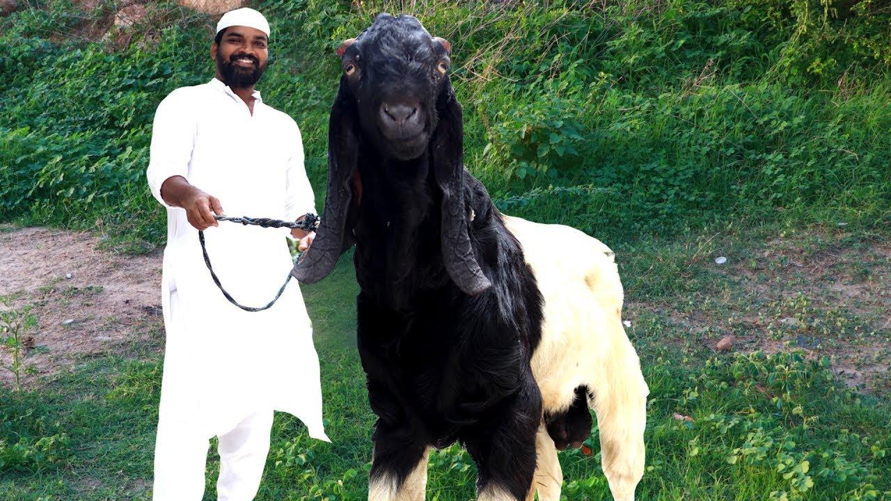 Download Mutton Marag | Hyderabadi Mutton Marag Recipe | Nawabs Kitchen