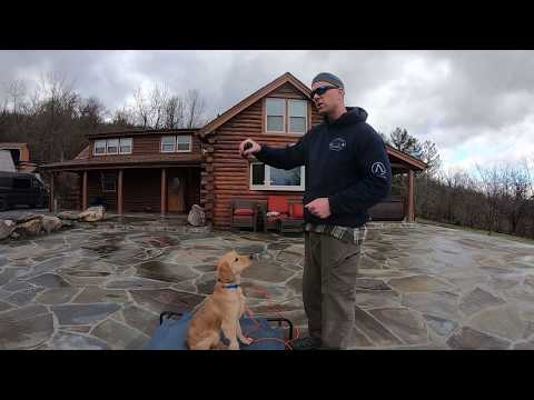 Training Young and Fearful Dogs (Golden Retriever) - The Ridgeside K9 Way.