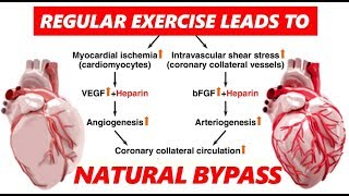 NATURAL BYPASS BY EXERCISE | Explained in Hindi | Dr.Education