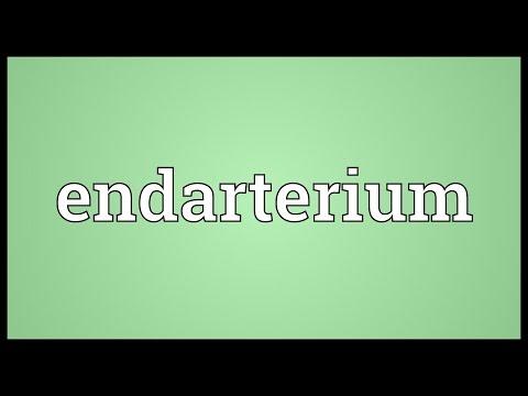 Header of endarterium