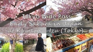 JR Tokyo Wide Pass Trip Part 1: Early Sakura in Japan (at Kawazu, Izu)