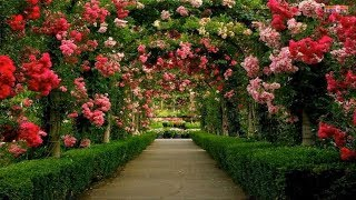 Gambar cover The Most Beautiful Gardens in Europe