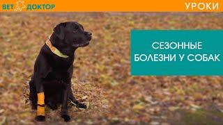 Сезонные болезни у собак