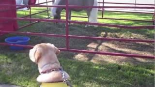 Puppy In Training Tv - Ep12 - Orange County Pet Expo
