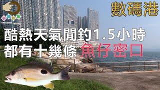 閒釣1.5小時『香港釣魚 : 岸釣』數碼港海濱長廊 {中英文字幕}