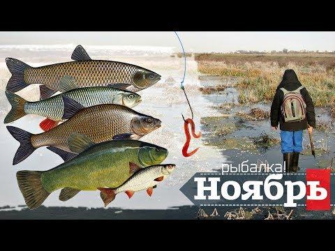 Как ловить рыбу в ноябре