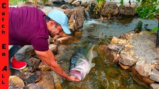 BIG FISH CHOKES on ANIMAL in New Pond!