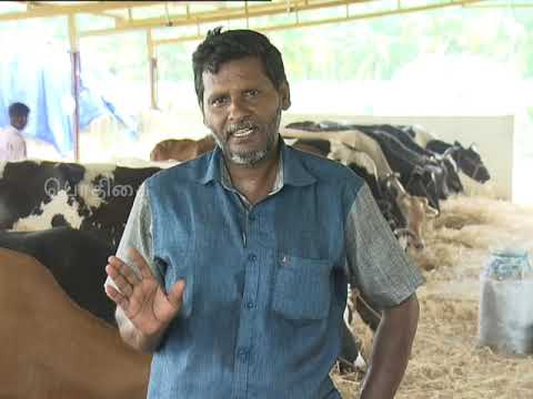 Download Pon Vilaiyum Bhoomi (11/07/2019) (Cow Farming as an Allied Job in Farming)