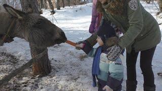 Видео для детей Добрый ослик ИА Развлечения детям Kind burro of news agency