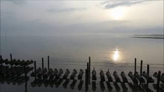 【ドローンでの空撮】「ひがた美人」が養殖されている中津干潟