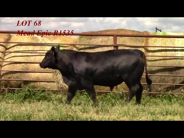 Mead Angus Lot 68