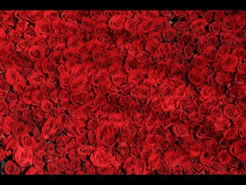 Free Red Rose Stock Images with CC0 licenses with no attribution required for Commercial Use
