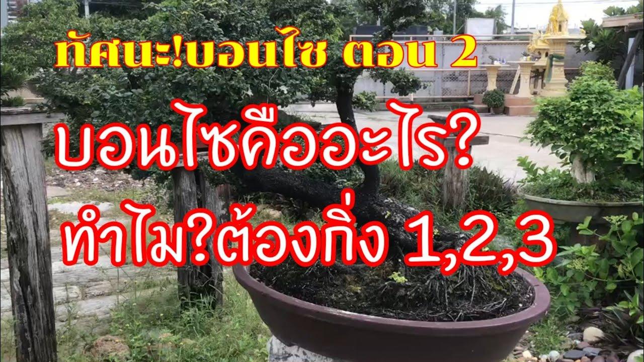 ทรรศนะบอนไซ กับอาจารย์ปองสาย 5 ; ที่นี่มีคำตอบ,บอนไซคืออะไร?,ทำไม?ต้องกิ่ง 1,2,3 ไปหาคำตอบกัน
