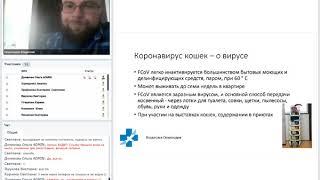 Коронавирус кошек. Владислав Скороходов. 14 06 2019