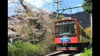 箱根登山鉄道 桜咲く沿線 モハ1形103-107編成他 2019年4月