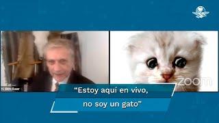 """""""No soy un gato"""", abogado se presenta en audiencia con filtro y se hace viral"""
