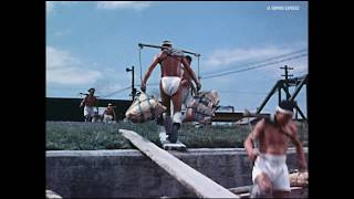 荷役はかわる 通運のパレット作業(1958) 物流アーカイブズ 日本通運