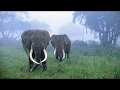 Amazing Animals Hidden In The Jungle - Thailand Forest Documentary - World Documentary