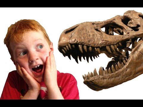 Things to do With Kids: The Ultimate Fossil Adventure
