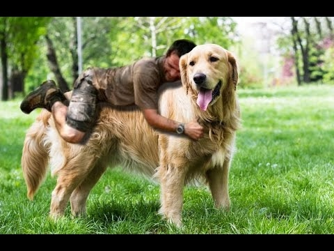 DOG BREED Best Most Loyal Dogs In The World [Mr Fahey]