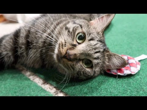 Boo Day 78 - Catnip Donuts - Training And Socializing A Feral Cat