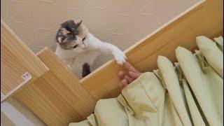 「なんか出てきた!」カーテンから出てきた手を高速猫パンチで迎撃!