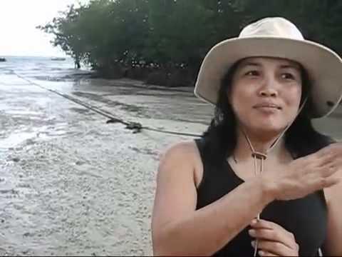 Hal interview with expert from the Mangrove Action Project