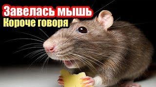 Короче говоря, я бездомная мышь [От первого лица] Питомец/Завелась мышь