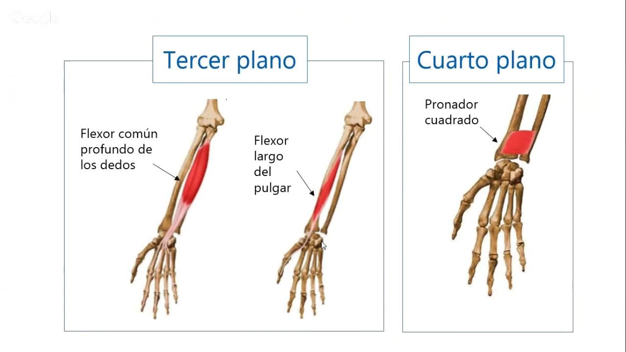 Codo Y Antebrazo Anatomía Ii Med Youtube