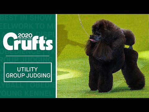 Utility Group Judging | Crufts 2020