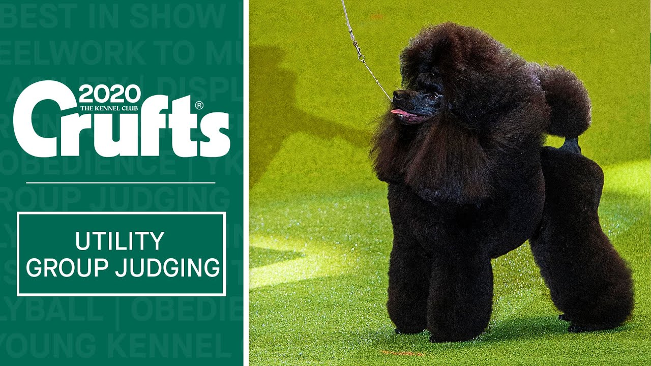 Utility Group Judging Crufts 2020 Youtube