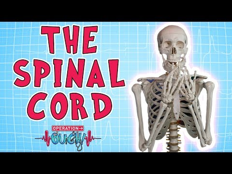 Operation Ouch - The Spinal Cord | Biology for Kids