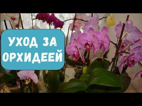Уход за орхидеей в домашних условиях   Орхидеи цветут круглый год   Как разбудить спящие почки
