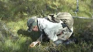 Охота и рыбалка в Карелии. Часть 5.Охота со спаниелями.(
